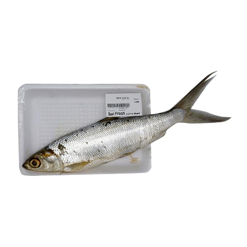 Blessing Fish Ikan Bandeng Besar 1 Kg [1- 2 Ekor Per Kg]
