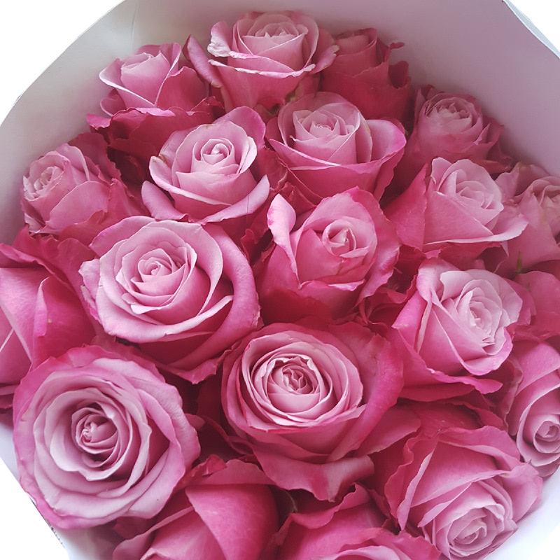 Aurora Flowershop - Deep Water Rose