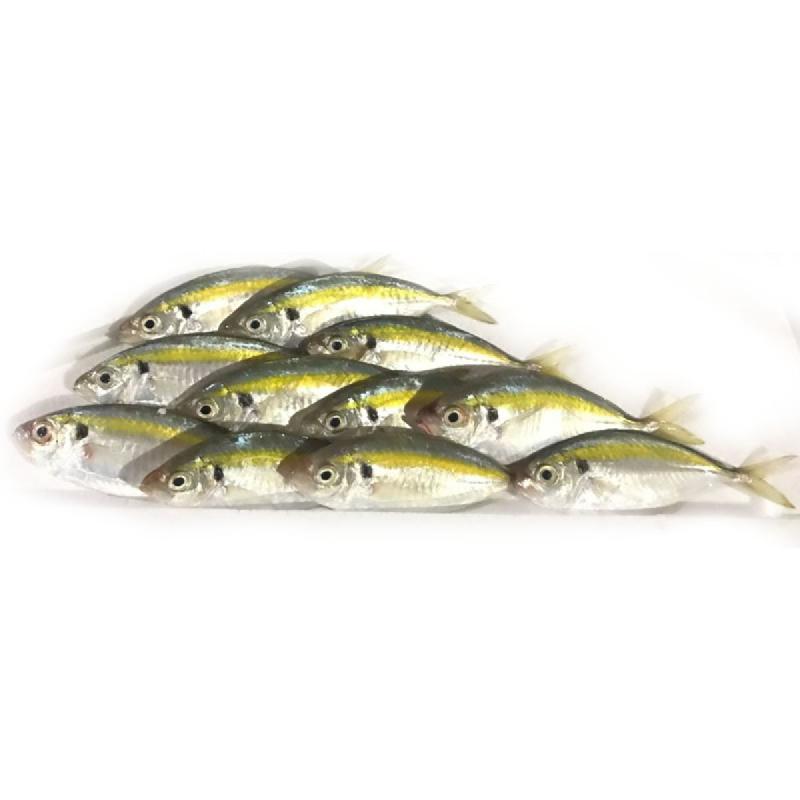Blessing Fish Ikan Selar Kuning 10 Cm A 1 Kg