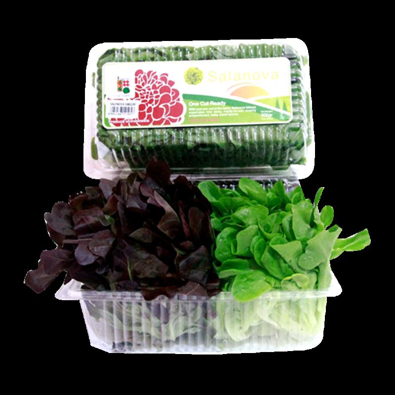 Amazing Farm Salanova Oakleaf Mixed ñ 350 Gr Per Pack