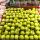Lotte Mart Buah Apel Granny Smith USA 1 Buah (250 Gr)