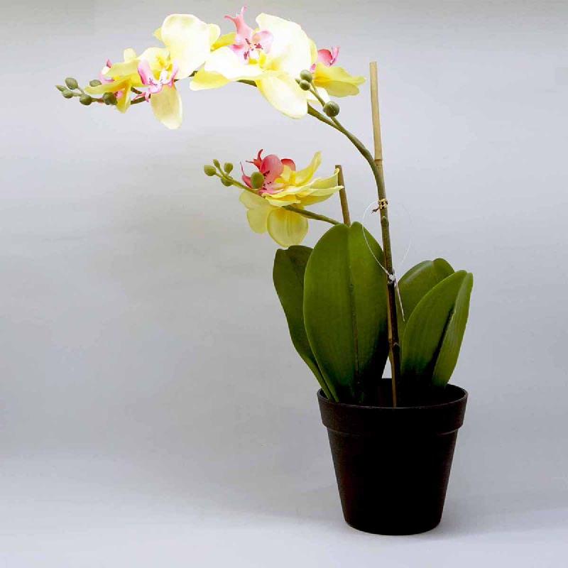 L-Living Orchid Bonsai 4Lvs 7F W P