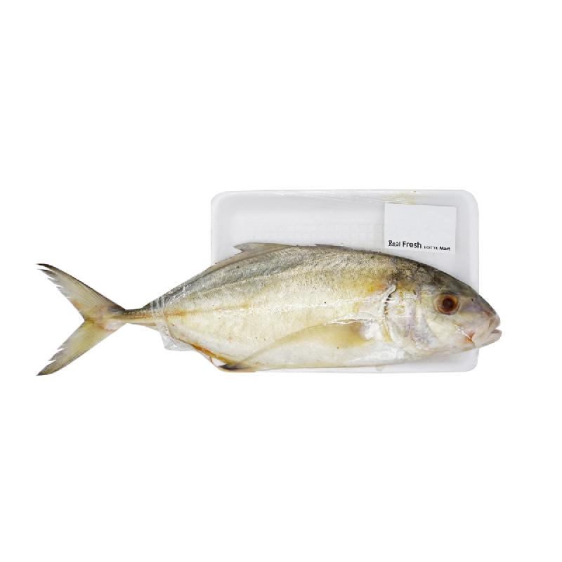 Lotte Mart Ikan Kuwe Lilin 1 Kg [1 - 2 Ekor Per Kg]