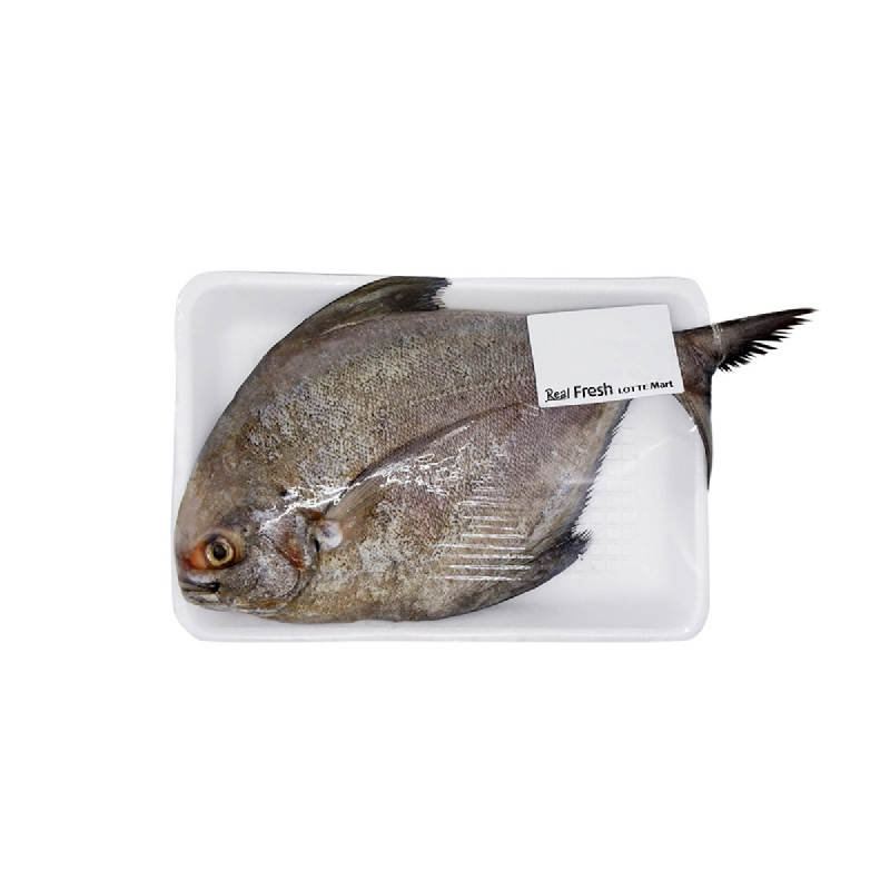 Blessing Fish Ef Ikan Bawal Hitam 1 Kg [2 - 3 Ekor Per Kg]