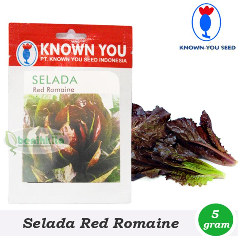 Benih Bibit Selada Red Romain L95-185