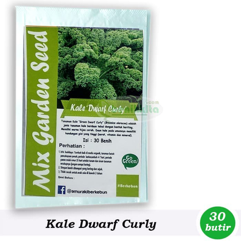 Bibit Benih Kale Dwarf Curly