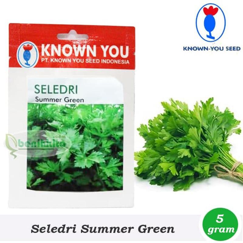 Benih Bibit Seledri Summer Green