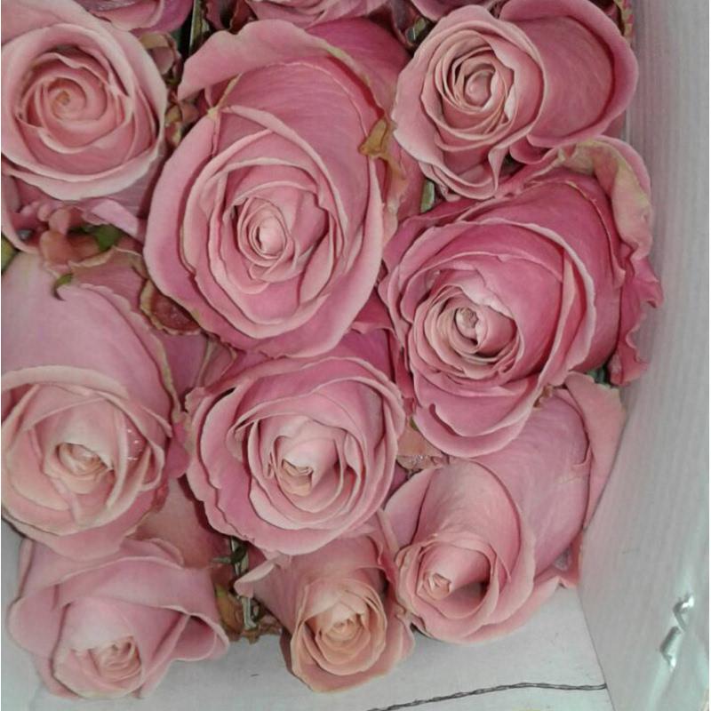Aurora Flowershop - Rose (Import)