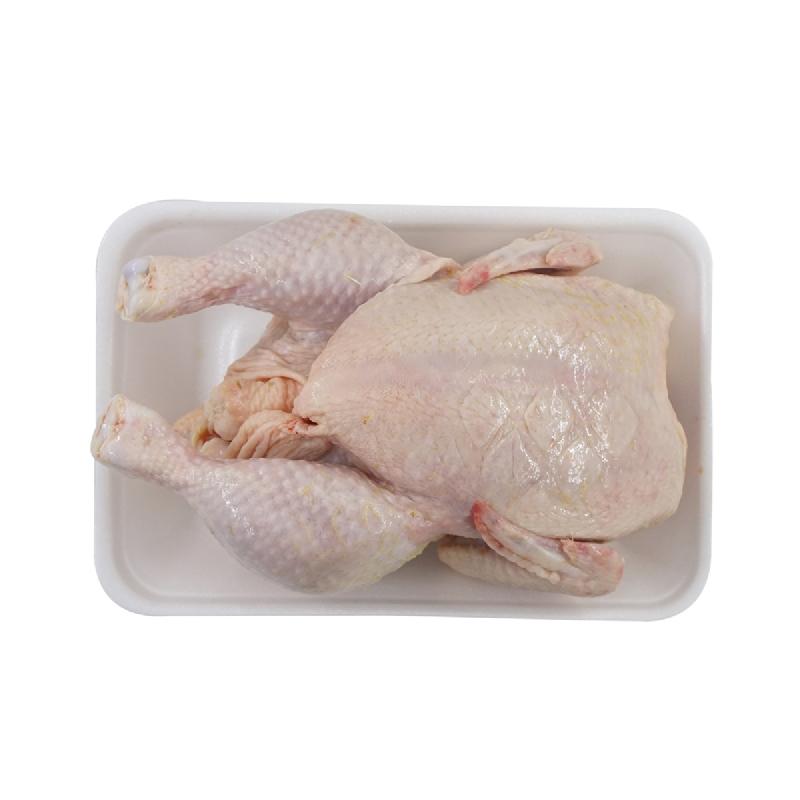 Ayam Broiler Freshekor