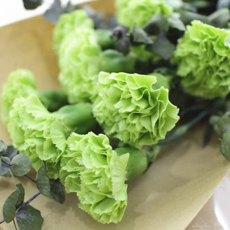 Aurora Flowershop - Green Carnation (import)