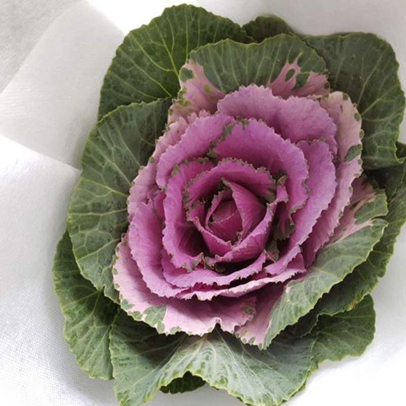 Aurora Flowershop - Purple Brassica