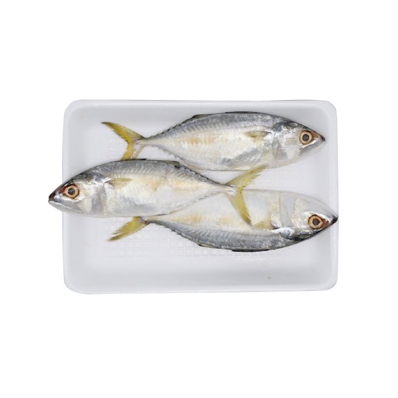 Blessing Fish Ikan Kembung Puket 1 Kg (10 - 12 Ekor Per Kg)