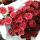 Aurora Flowershop - Red Puma